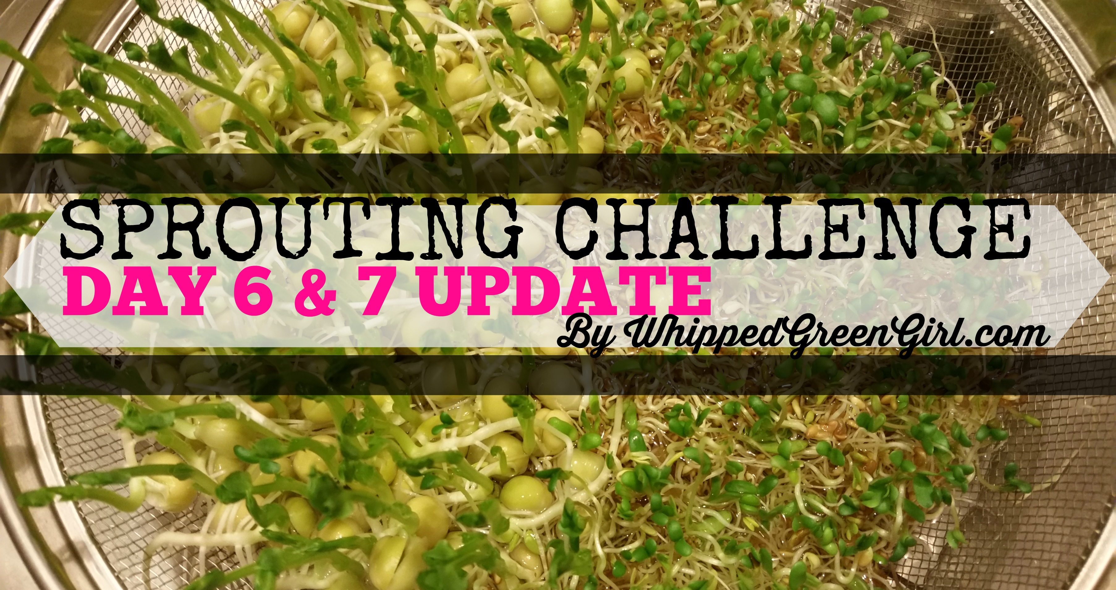 Sprouting Challenge Day 6 & 7 (Update)