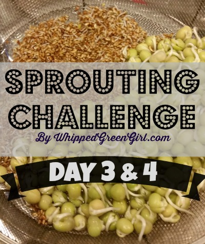 Sprouting Challenge Day 3 and 4 UPDATE
