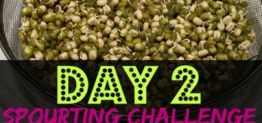 Sprouting Challenge (Day 2) by WhippedGreenGirl.com #sprouting #superfoods #superseeds