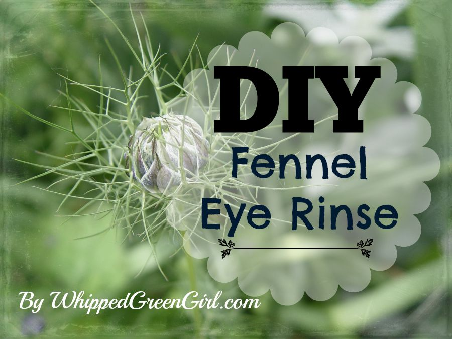 DIY Fennel Eye Rinse (By WhippedGreenGirl.com) #DIY #Organic