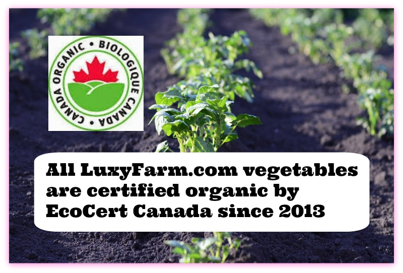 Luxy Farm Review (By WhippedGreenGirl.com) #LocalGrown #Organic #Vegetable Weekly Baskets + more...